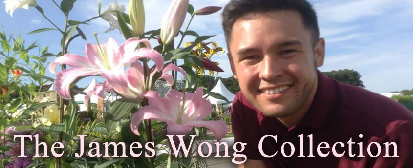 The James Wong Lily Collection