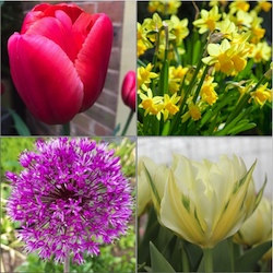 Autumn Planted Bulb Collections