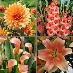 Spring Planted Bulb Collections