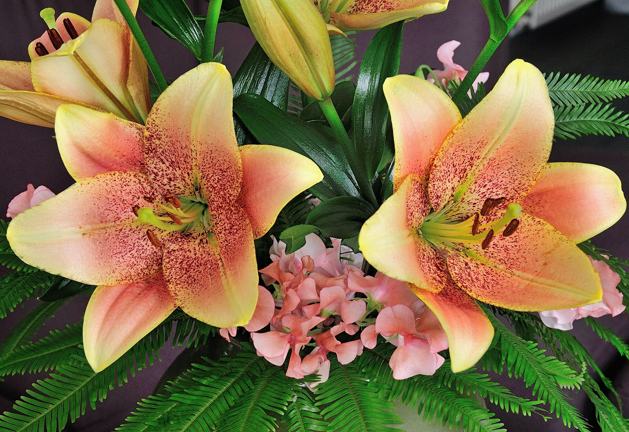 Sweet Desire Longiflorum Asiatic Lily From The Gold Medal Winning
