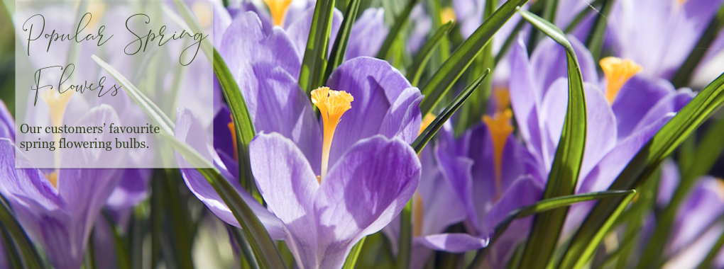 Popular Spring Flowers