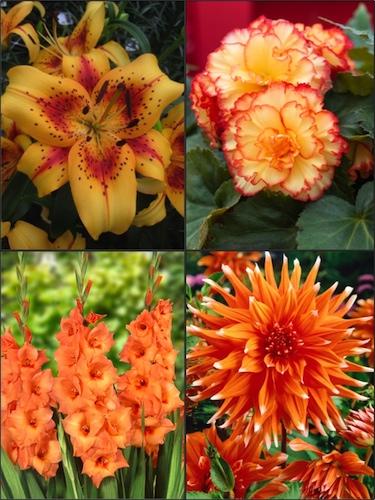 Orange Summer Flower Collection (Pack of 26)