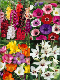 Mixed Summer Bulb Collection