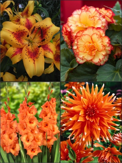 Orange Summer Flower Collection (Pack of 26)