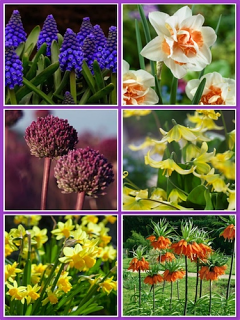 Special Offer Spring Collection (Pack of 84 Bulbs)