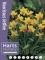 Miniature Narcissus 'Jetfire' (Pack of 20 Bulbs)