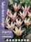 Mini Tulip Heart's Delight (Pack of 20 Bulbs)