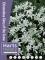 Chinodoxa Glory of the Snow (Pack of 50 Bulbs)