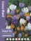 Mixed Crocus (Pack of 40 Bulbs)