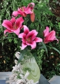 Paraquay Oriental Trumpet Lily