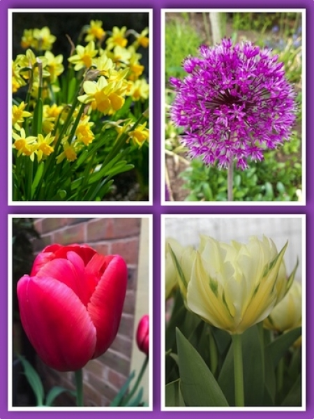 The Ideal Spring Bulb Collection (Pack of 70 Bulbs)