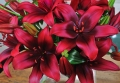 Foreigner Asiatic Lily