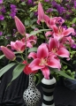Dalian OT Lily Cut Flower