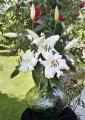 Mezzana Lily Cut flower