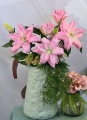 Roselily Editha Double Oriental Lily