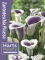 Zantedeschia 'Picasso' (Pack of 3 Bulbs)