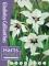 Acidanthera Gladiolus Callianthus (Pack 20 Bulbs)