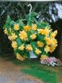 Yellow Begonia Pendula