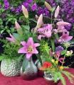 Myth OT Lilies