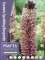 Eucomis Sparkling Burgundy (Pack of 3 Bulbs)