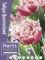 Queensland (Pack of 20 Bulbs)