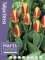 Stresa (Pack of 20 Bulbs)