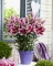 Star Romance Oriental Dwarf lily