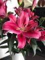 Largo OT Lily