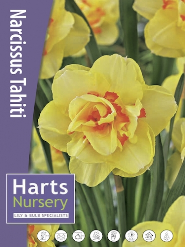 Narcissus 'Tahiti' (Pack of 20 Bulbs)