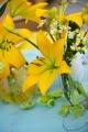 Yellow LA Lily