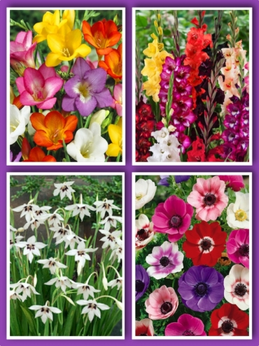 Mixed Summer Flowers (Pack of 145 Bulbs)   Over 35% OFF!  