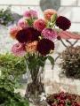 Arabian Night dahlia in vase