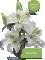 Lily Empress
