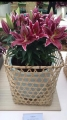 Magny course Lily in basket