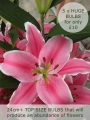 Lily 'Marlon' (Pack of 5) | Huge Bulbs