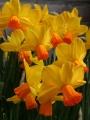 Velocity Narcissus