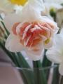 My Story Daffodil for cut flower arrangement