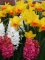 Velocity and Hyacinths