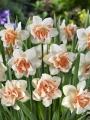 Narcisuss Replete