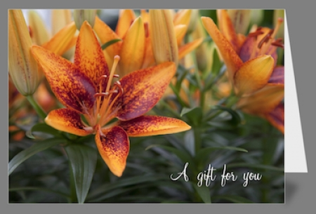Greeting Card - Asiatic Lily