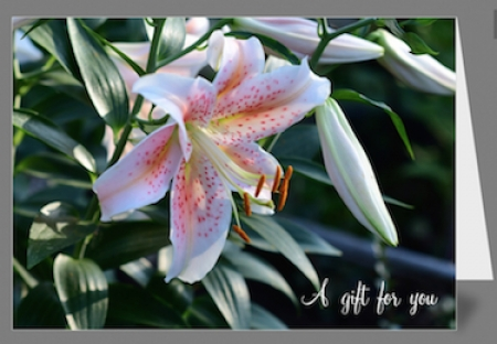 Greeting Card - Oriental Lily