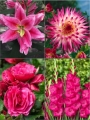 Pink Summer Flower Collection (Pack of 26)