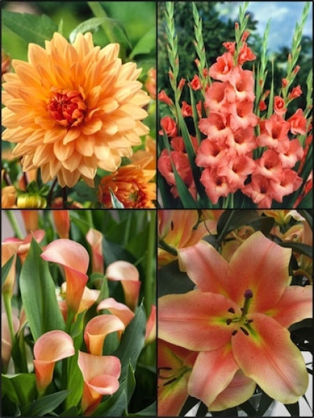 Peach Summer Flower Collection (Pack of 24)