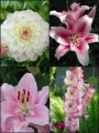 Blush Pink Summer Flower Collection (Pack of 24)