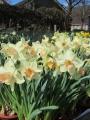 Narcissus Modulation