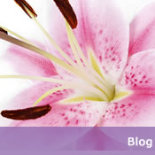 Try out our Blog about Lily and other types of bulbs