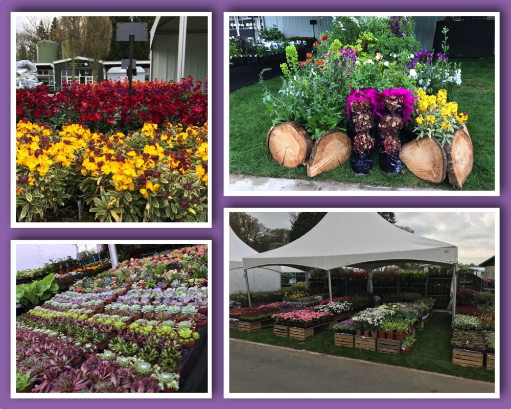 Harrogate Spring Flower Show Harts Nursery The Lily Bulb Specialists